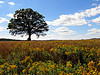 Image of tree in field