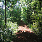 Watsontown Trail in summer.
